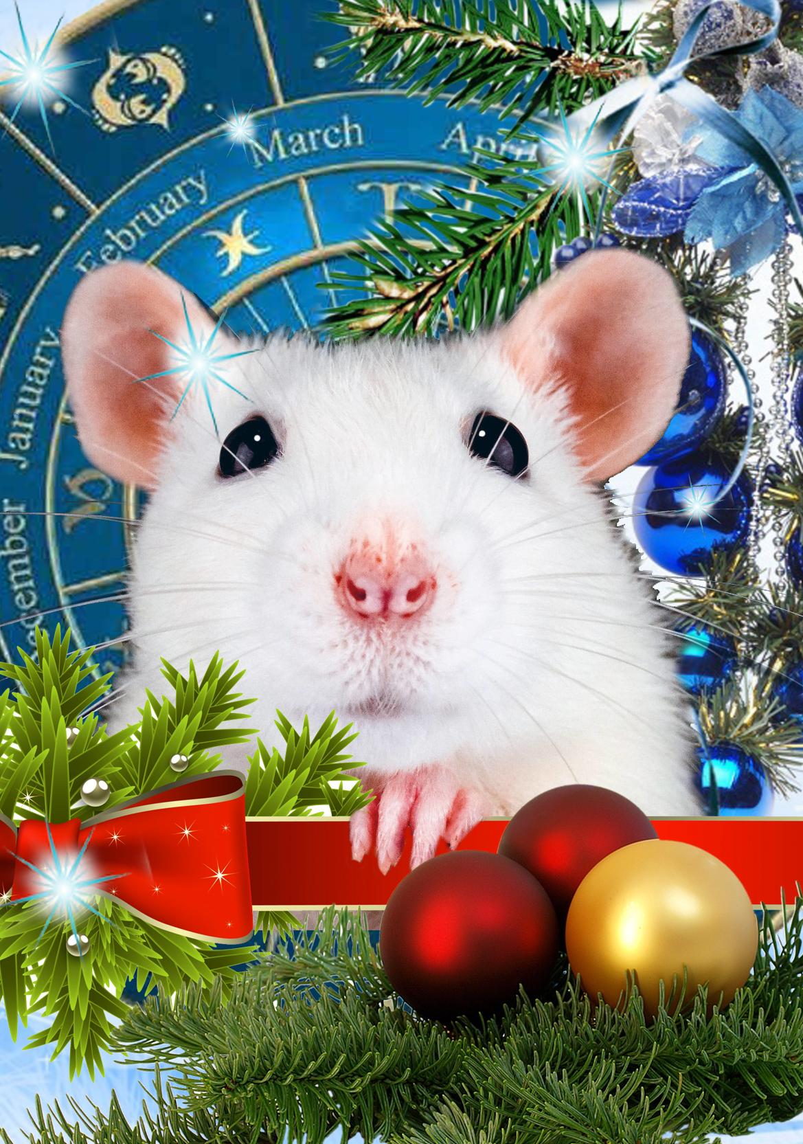 Крыса – символ мудрости