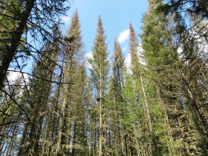 Посеять лес и укротить пожары